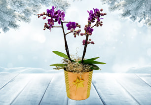 Joyful Orchid's