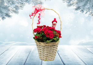 Holiday Begonia Basket
