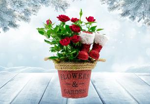 Santa's Boots and Roses