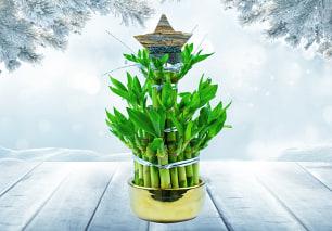 Festive Bamboo