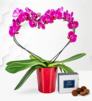 Valentine's Heart Orchid