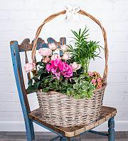 Luxury Mother's Garden Basket