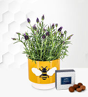 Lavender Bee Planter