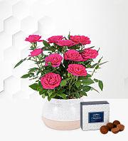 Lovely Rose Planter