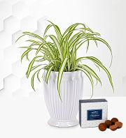 Gorgeous Green Plant