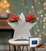 Christmas Kalanchoe Star