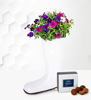 Petunia Wellington Planter