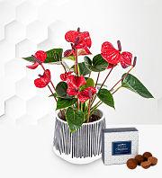 Delightful Anthurium