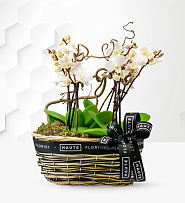 Luxury Orchid Basket