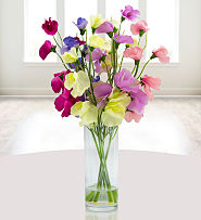 Sweetpea Sensation