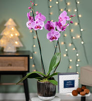 Christmas Purple Orchid