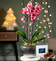 Christmas Luxury Orchid