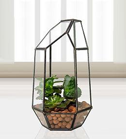 Succulent Trio Terrarium