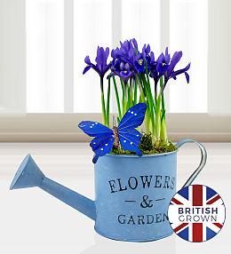 Iris Planter