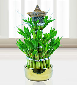Christmas Lucky Bamboo