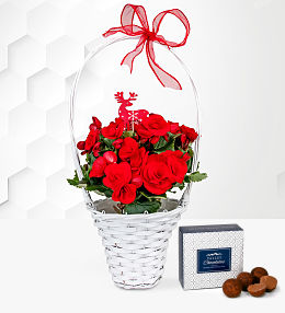 Begonia Christmas Basket