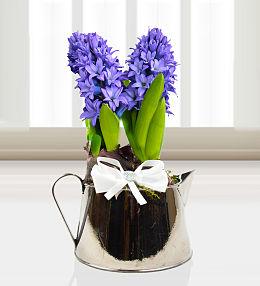 Jug of Hyacinths
