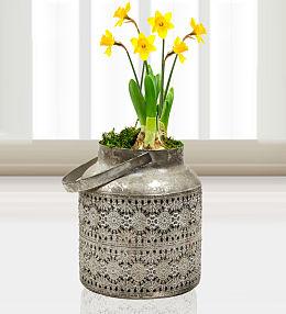 Mum's Daffodils