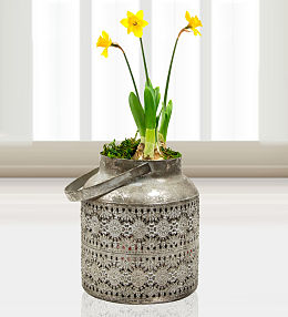 Indian Planter