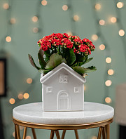 Christmas Kalanchoe House
