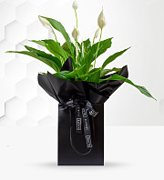Luxury Peace Lily