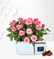 Rose Duo planter