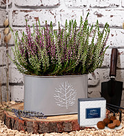 Outdoor Calluna Duo Tin