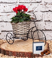 Outdoor Tricycle cyclamen