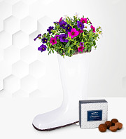 Petunia Wellington Planter