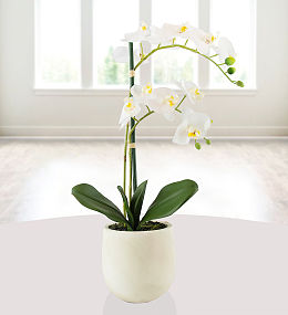 Elegant Silk Potted Orchid