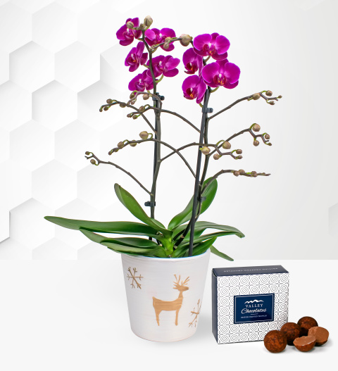 Christmas Orchids - Free Chocs