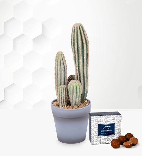 Beautiful Faux Cactus - Free Chocs