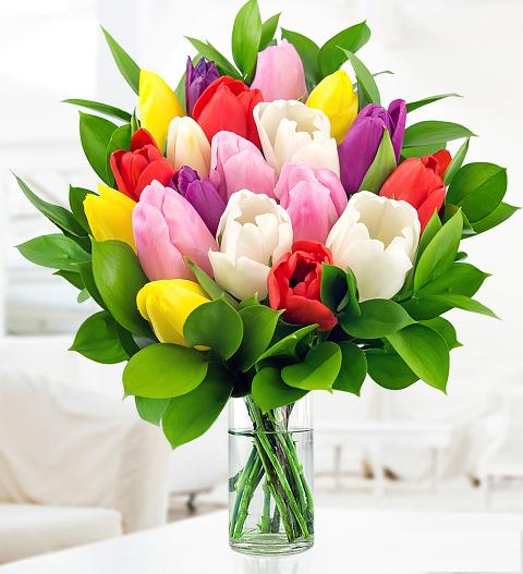 Tulips £22.99