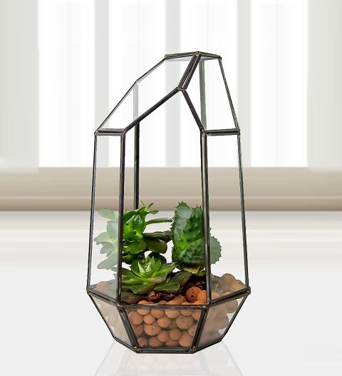 Succulent Trio Terrarium Plants 24 99 Free Chocolates