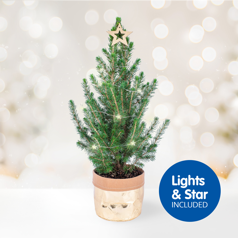 Letterbox Christmas Tree