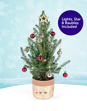 Mini Christmas Tree Gift
