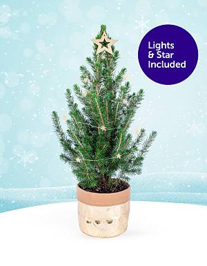 Mini Tree with Lights