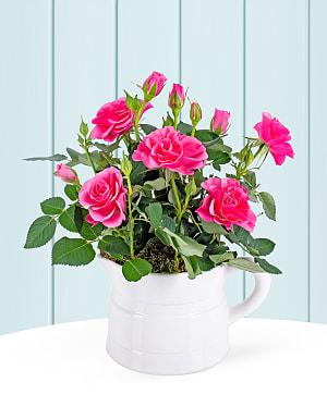 Spring Rose Jug