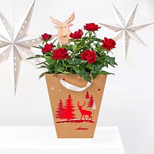Festive Rose Reindeer