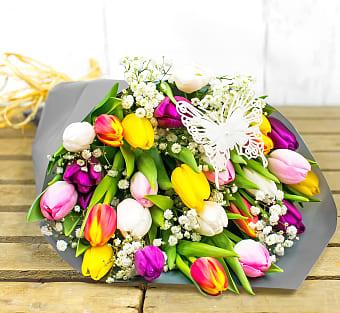 Tulip Delights