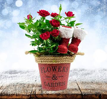 Santa's Rose Basket