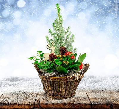 Christmas Mix Basket