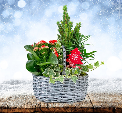 Christmas Mix Basket