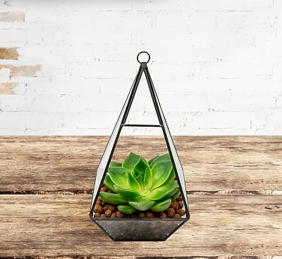 Single Succulent Terrarium