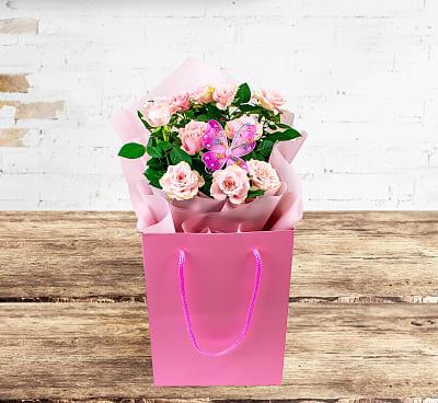 Classic Rose Plant