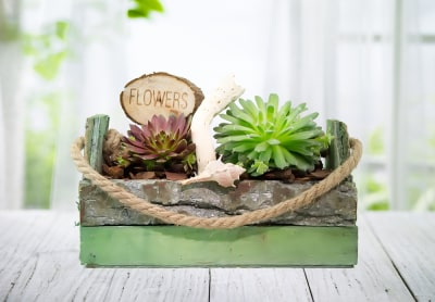 Seasonal Succulents