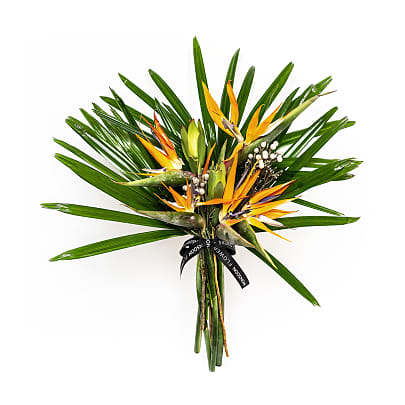 Free delivery on Bird of Paradise
