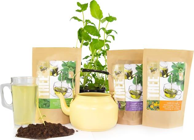Grow Your Own Tea
