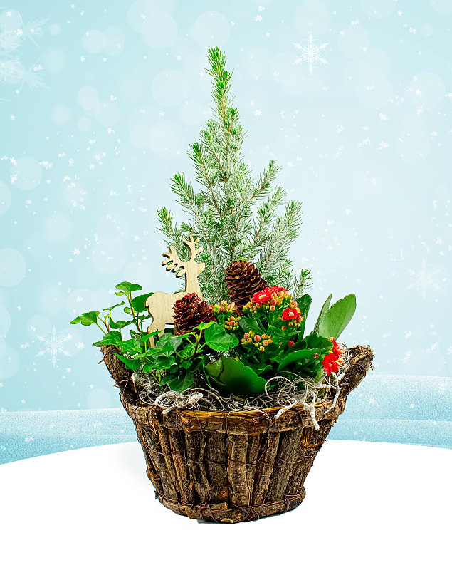 Mixed Festive Basket