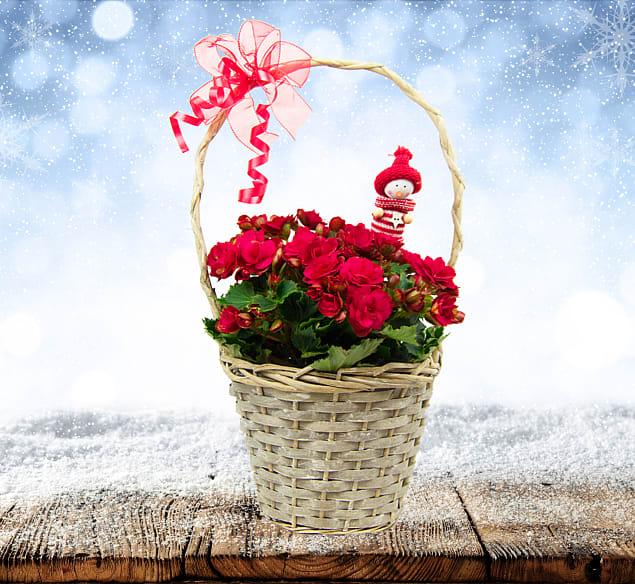 Begonia Basket